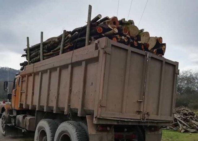 کشف 10 تن چوب جنگلی قاچاق در آستارا