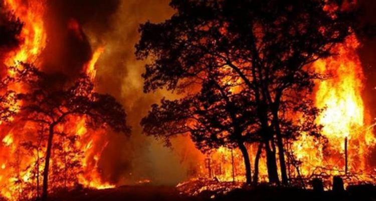 آتش سوزی در ارتفاعات حسین آباد شیراز