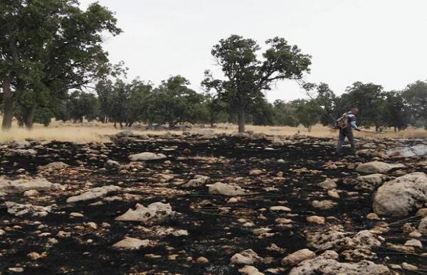 آتش سوزی در ارتفاعات منطقه حفاظت شده مله گاله مهار شد