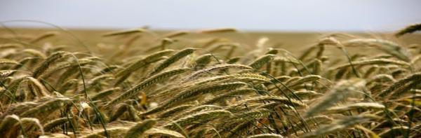 ویزای کانادا: رونمایی کانادا از پایلوت مهاجرتی مرتبط با صنایع غذایی و کشاورزی