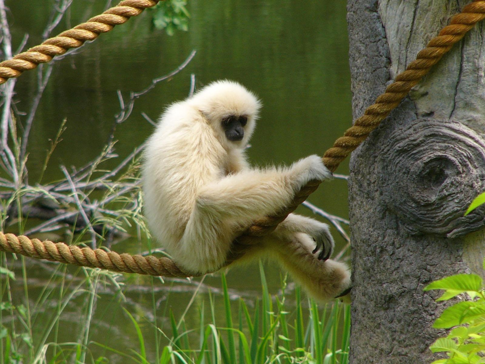 جالب ترین حیوانات تایلند