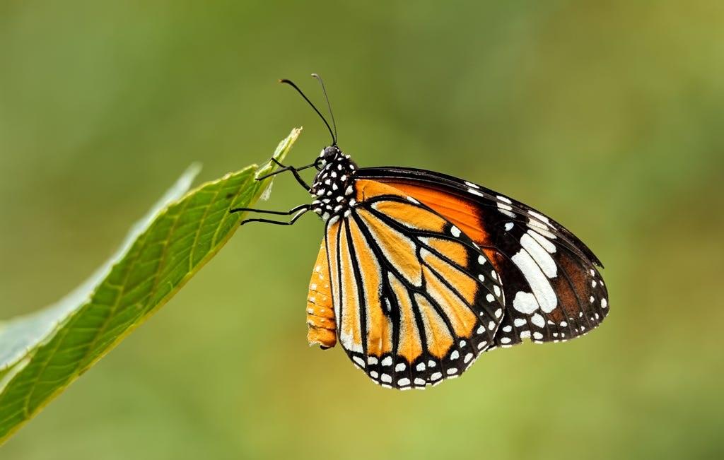 آشنایی با باغ پروانه های سامویی